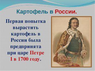 Картофель в России. Первая попытка вырастить картофель в России была предприн