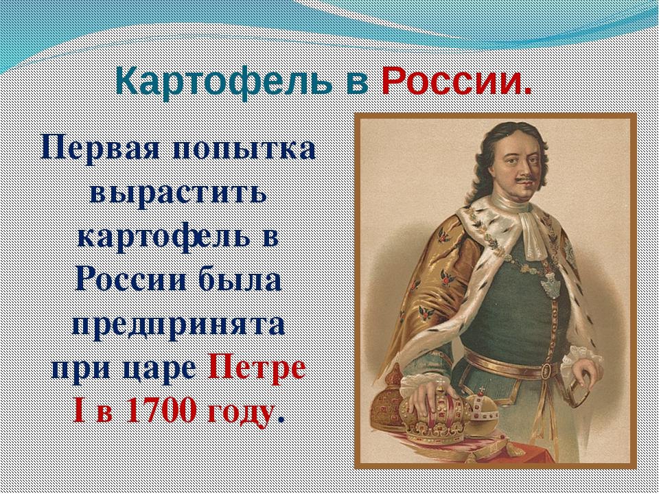 Картофель в России. Первая попытка вырастить картофель в России была предприн...