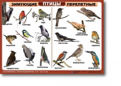 http://img3.proshkolu.ru/content/media/pic/std/1000000/673000/672228-eb9d3326fee5146d.jpg