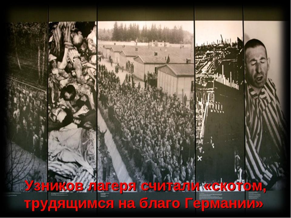 Узников лагеря считали «скотом, трудящимся на благо Германии»