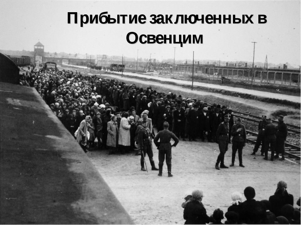 Прибытие заключенных в Освенцим