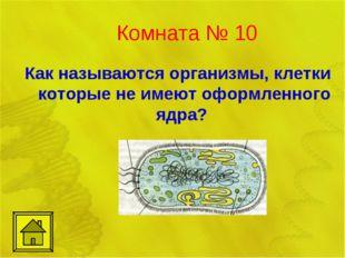 Комната № 10 Как называются организмы, клетки которые не имеют оформленного я