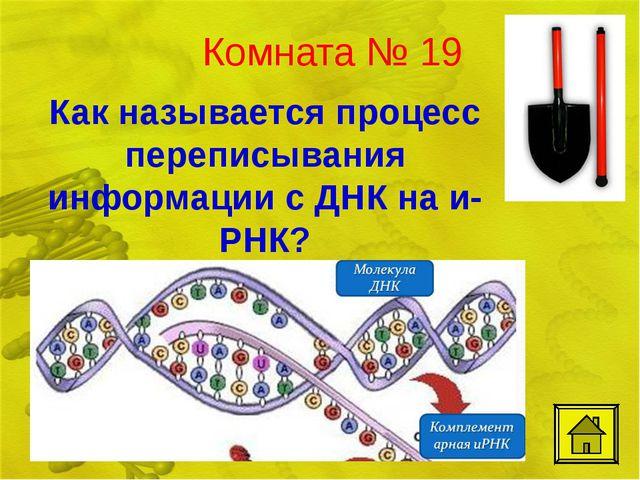 Комната № 19 Как называется процесс переписывания информации с ДНК на и-РНК?