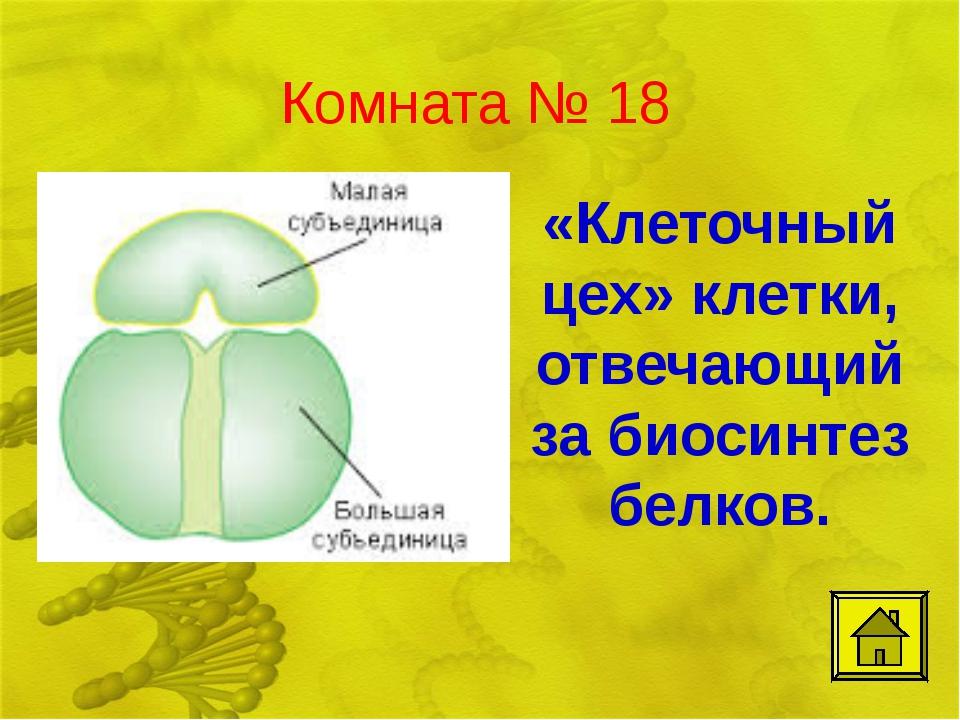 Комната № 18 «Клеточный цех» клетки, отвечающий за биосинтез белков.