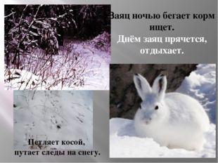 Заяц ночью бегает корм ищет. Днём заяц прячется, отдыхает. Петляет косой, пут