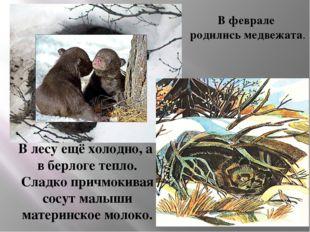 В феврале родились медвежата. В лесу ещё холодно, а в берлоге тепло. Сладко п
