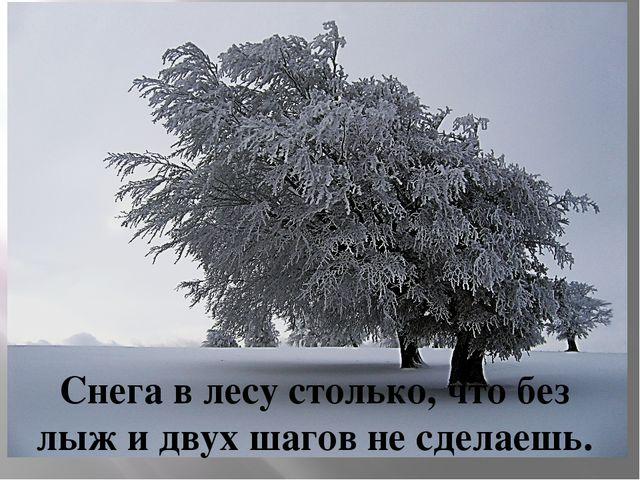 Снега в лесу столько, что без лыж и двух шагов не сделаешь.