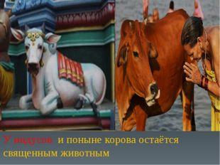 У индусов и поныне корова остаётся священным животным