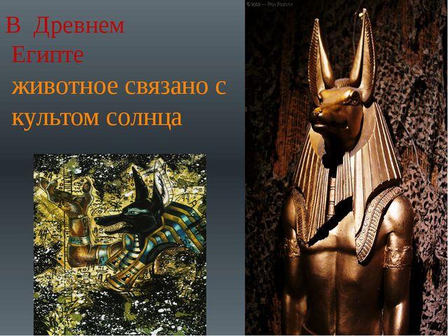 В Древнем Египте животное связано с культом солнца