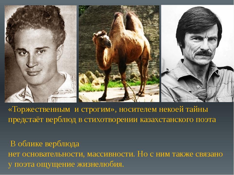 «Торжественным и строгим», носителем некоей тайны предстаёт верблюд в стихотв...