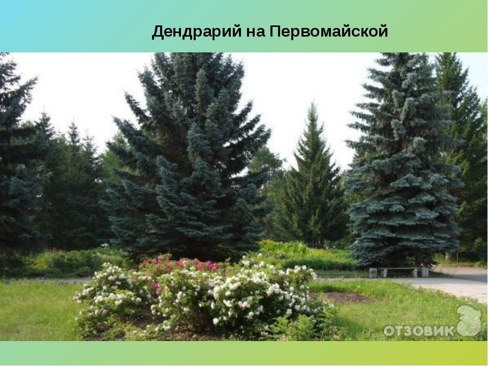 Дендрарий на Первомайской