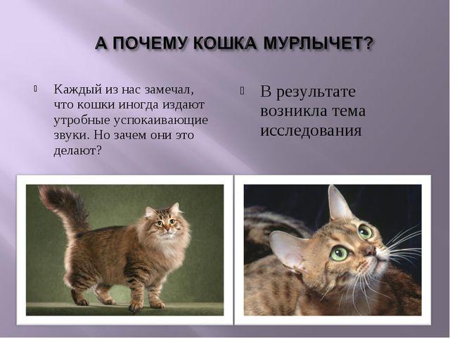 Каждый из нас замечал, что кошки иногда издают утробные успокаивающие звуки....