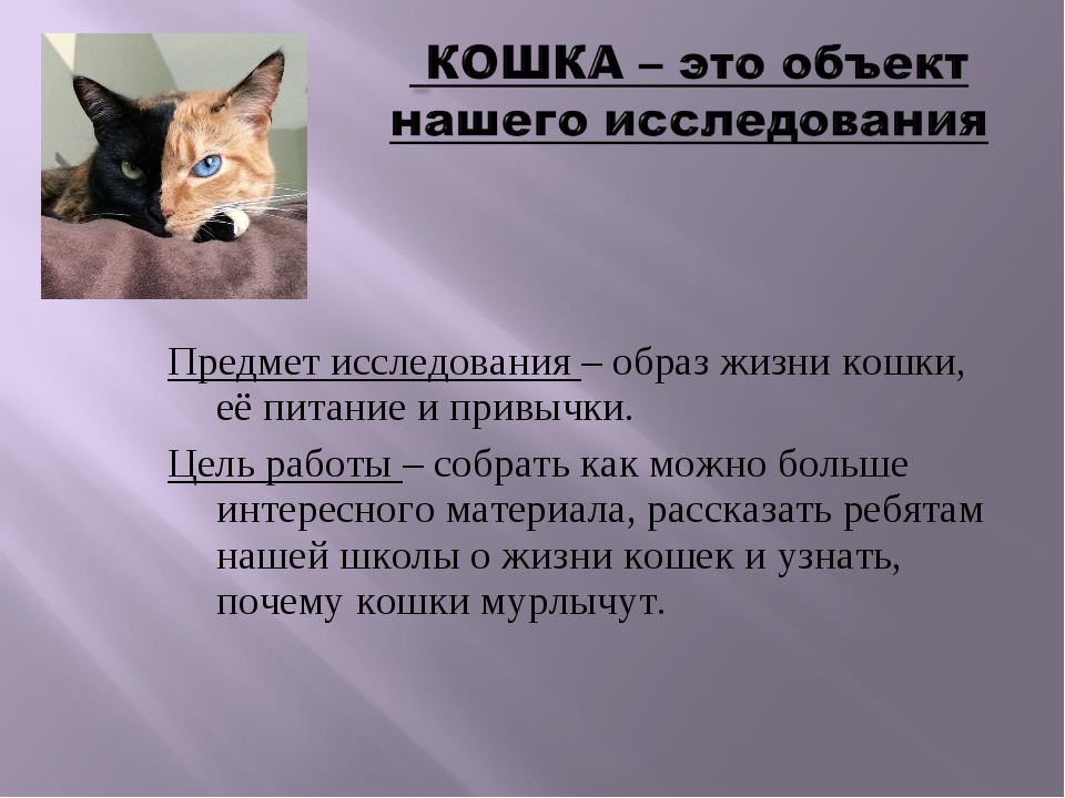 Предмет исследования – образ жизни кошки, её питание и привычки. Цель работы...