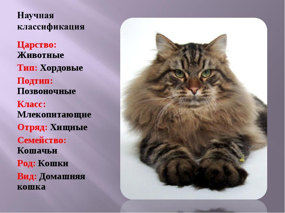 Царство: Животные Тип: Хордовые Подтип: Позвоночные Класс: Млекопитающие Отря...