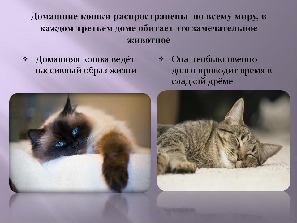 Домашняя кошка ведёт пассивный образ жизни Она необыкновенно долго проводит в...