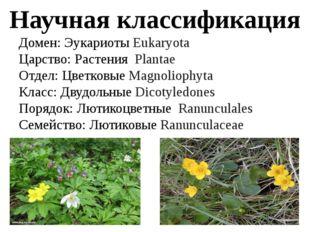 Научная классификация Домен: Эукариоты Eukaryota Царство: Растения Plantae