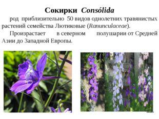 СокиркиConsólida род приблизительно 50видоводнолетнихтравянистых растен