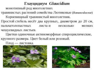 ГлауцидиумGlaucídium монотипныйродмноголетних травянистыхрастенийсемей