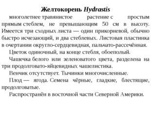 ЖелтокореньHydrastis многолетнеетравянистое растениес простым прямымстеб