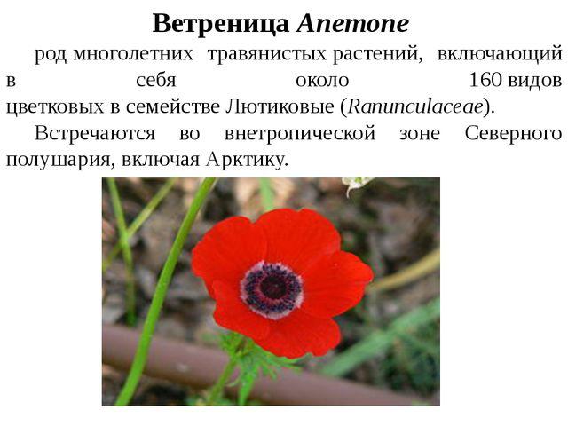 ВетреницаAnemone родмноголетних травянистыхрастений, включающий в себя...
