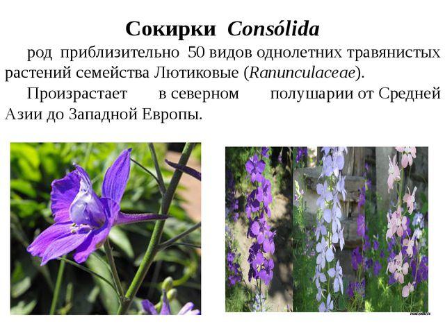 СокиркиConsólida род приблизительно 50видоводнолетнихтравянистых растен...