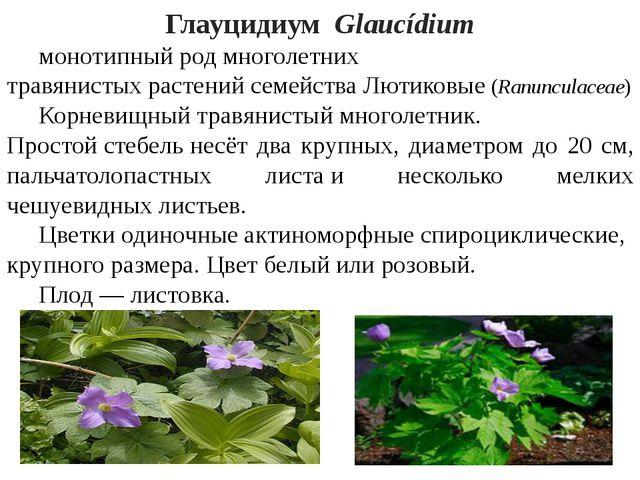 ГлауцидиумGlaucídium монотипныйродмноголетних травянистыхрастенийсемей...