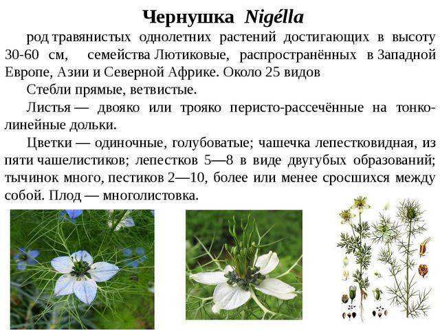 ЧернушкаNigélla родтравянистых однолетних растений достигающих в высоту...