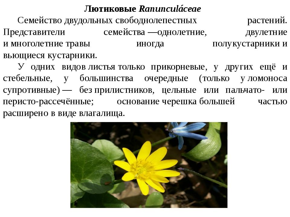 Лютиковые Ranunculáceae Семействодвудольныхсвободнолепестных растений. Пр...