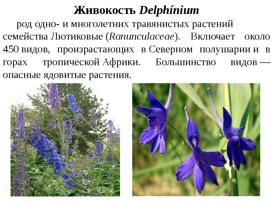 ЖивокостьDelphínium рододно-имноголетнихтравянистыхрастений семейства...