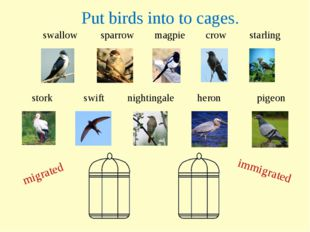 swallow sparrow magpie crow starling migrated immigrated stork swift nighting