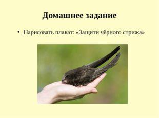 Домашнее задание Нарисовать плакат: «Защити чёрного стрижа»