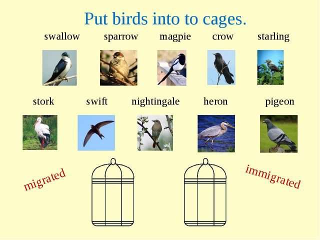 swallow sparrow magpie crow starling migrated immigrated stork swift nighting...