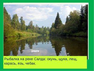 Рыбалка на реке Салда: окунь, щука, лещ, карась, язь, чебак.