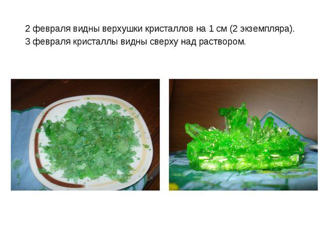 2 февраля видны верхушки кристаллов на 1 см (2 экземпляра). 3 февраля кристал...