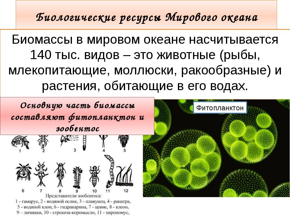 Биологические ресурсы Мирового океана Биомассы в мировом океане насчитывается...