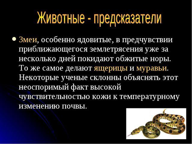 Змеи, особенно ядовитые, в предчувствии приближающегося землетрясения уже за...