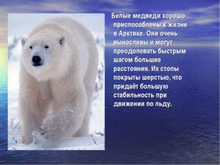 Белые медведи хорошо приспособлены к жизни в Арктике. Они очень выносливы и