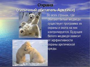 Охрана (типичный обитатель Арктики) Во всех странах, где обитают белые медвед