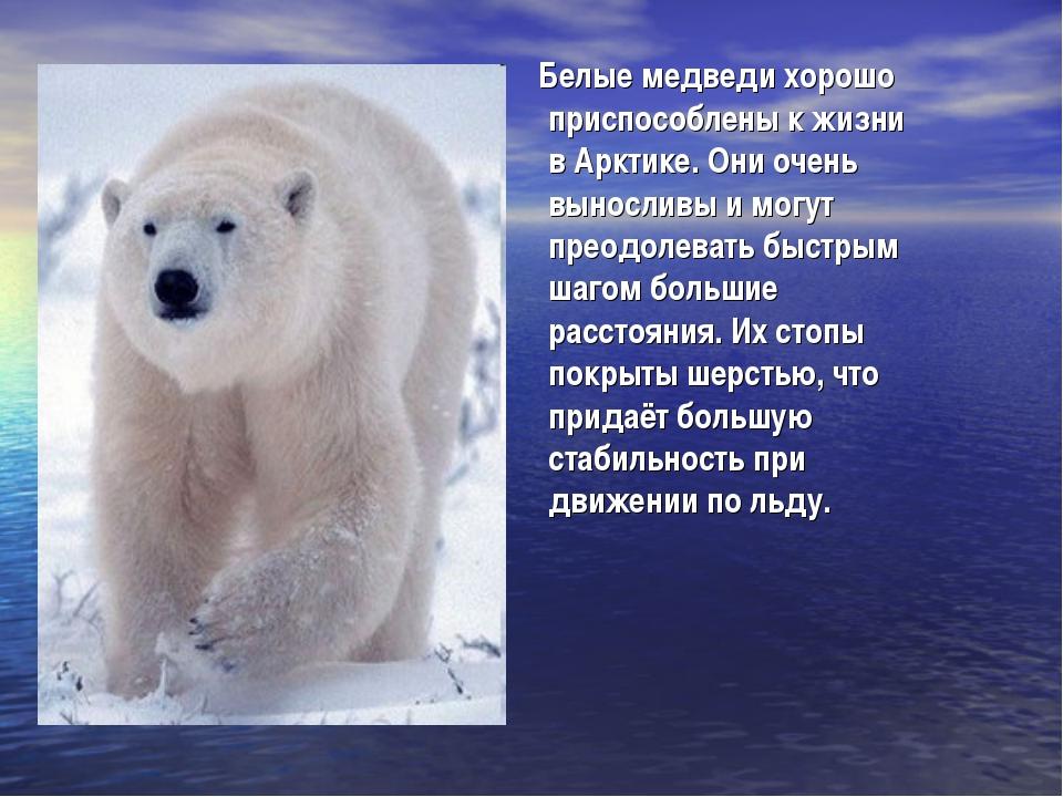 Белые медведи хорошо приспособлены к жизни в Арктике. Они очень выносливы и...