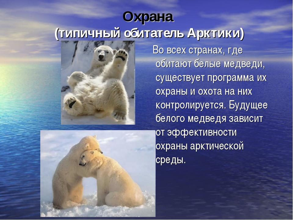 Охрана (типичный обитатель Арктики) Во всех странах, где обитают белые медвед...
