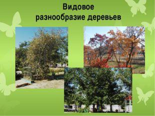 Видовое разнообразие деревьев