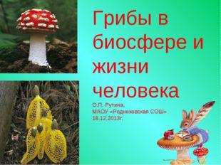 Грибы в биосфере и жизни человека О.П. Рутина, МАОУ «Родниковская СОШ» 18.12.