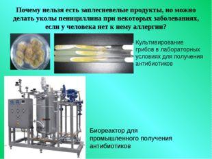 Почему нельзя есть заплесневелые продукты, но можно делать уколы пенициллина