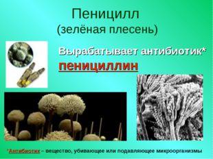 Пеницилл (зелёная плесень) Вырабатывает антибиотик* пенициллин *Антибиотик –