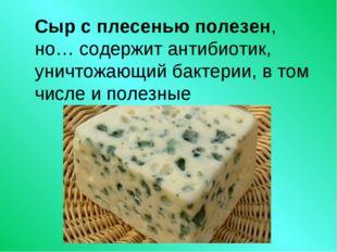 Сыр с плесенью полезен, но… содержит антибиотик, уничтожающий бактерии, в том