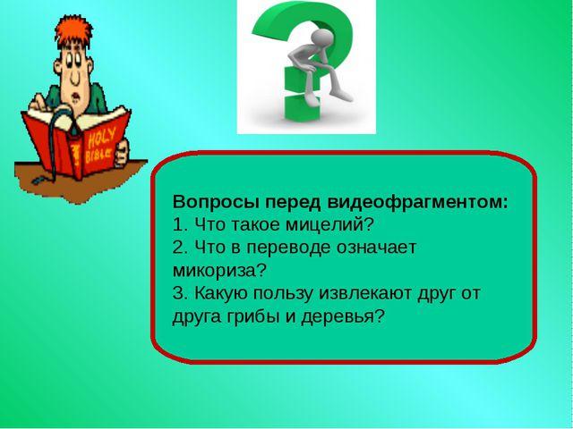 Вопросы перед видеофрагментом: 1. Что такое мицелий? 2. Что в переводе означа...
