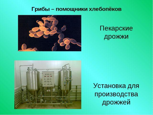 Грибы – помощники хлебопёков Пекарские дрожжи Установка для производства дрож...