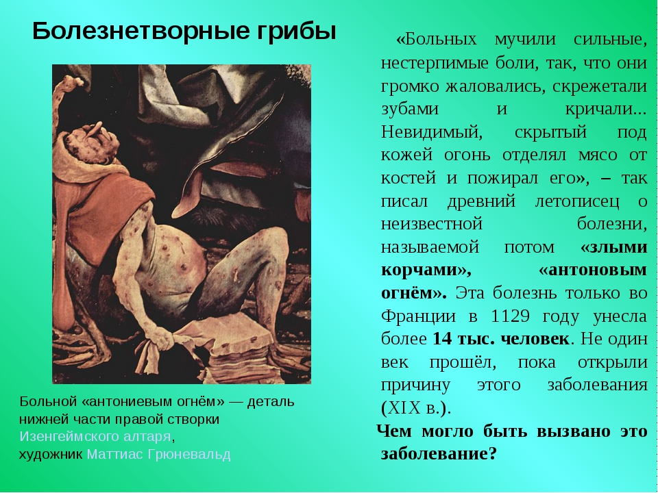Болезнетворные грибы «Больных мучили сильные, нестерпимые боли, так, что они...