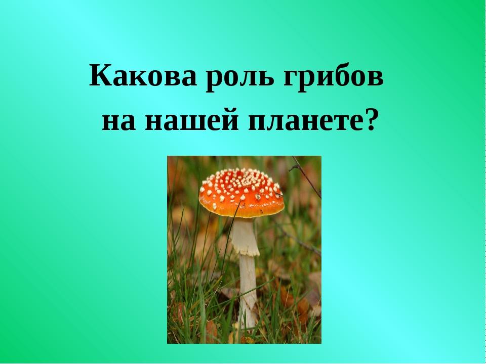 Какова роль грибов на нашей планете?