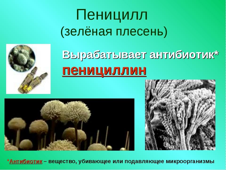 Пеницилл (зелёная плесень) Вырабатывает антибиотик* пенициллин *Антибиотик –...